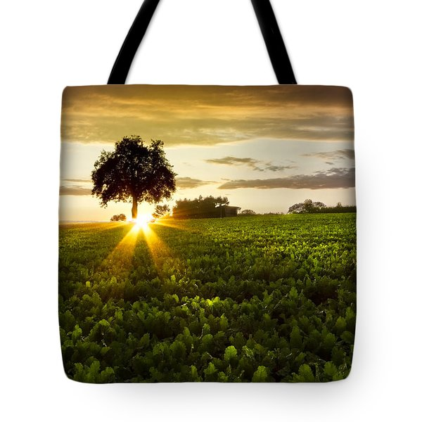 A Golden Evening  Tote Bag by Debra and Dave Vanderlaan