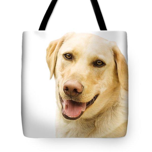 A Golden Labrador Tote Bag by Chris Knorr