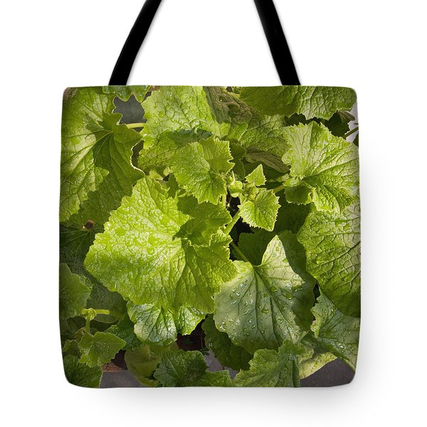 Tote Bag featuring the photograph A Green Leafy Vegetable Plant After Watering In Bright Sunrise by Ashish Agarwal