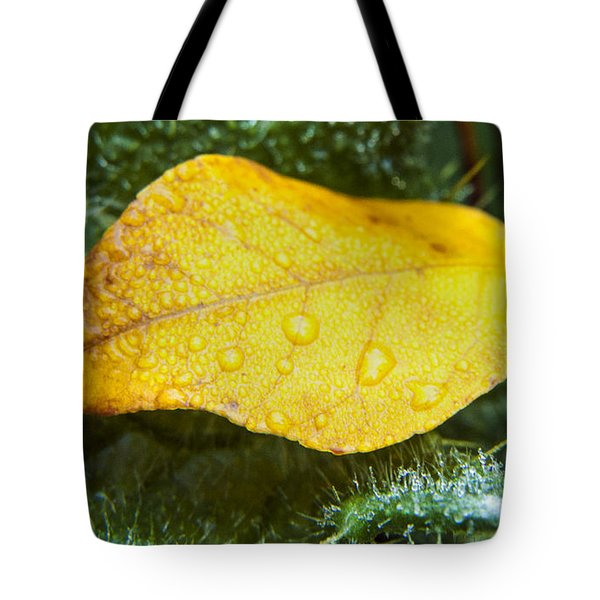 A Leaf Among The Icy Greens Tote Bag