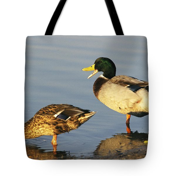 A Male And Female Mallard Duck Tote Bag by Rich Reid