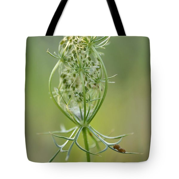 Tote Bag featuring the photograph A Meal Of Lace by JD Grimes