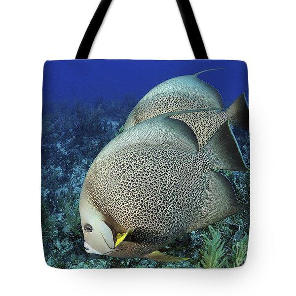 A Pair Of Gray Angelfish On A Caribbean Tote Bag by Karen Doody