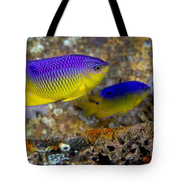A Pair Of Juvenile Cocoa Damselfish Tote Bag by Michael Wood