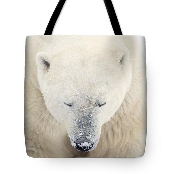 A Polar Bear Ursus Maritimus Resting Tote Bag by Richard Wear