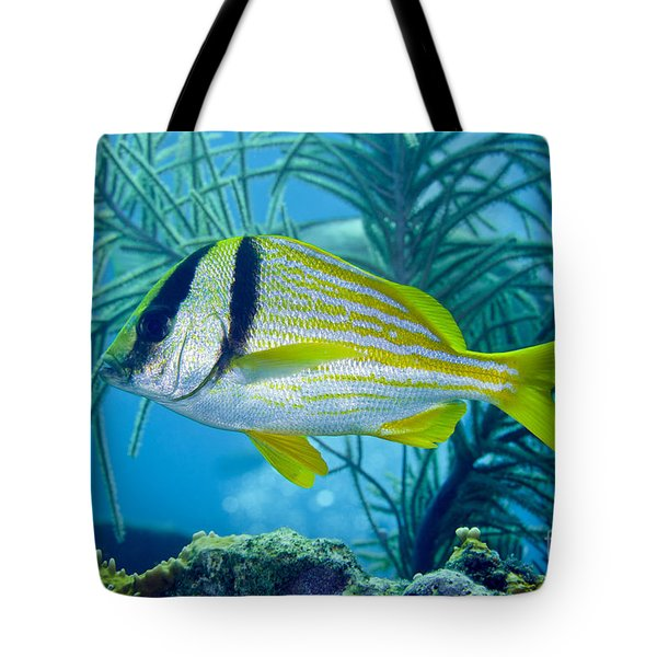 A Porkfish Swims By Sea Plumes Tote Bag by Terry Moore