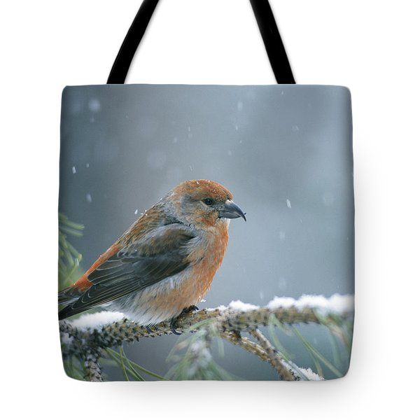 A Red Crossbill Loxia Curvirostra Tote Bag