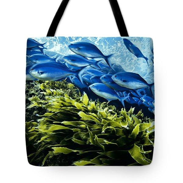 A School Of Blue Maomao Swim Tote Bag by Brian J. Skerry