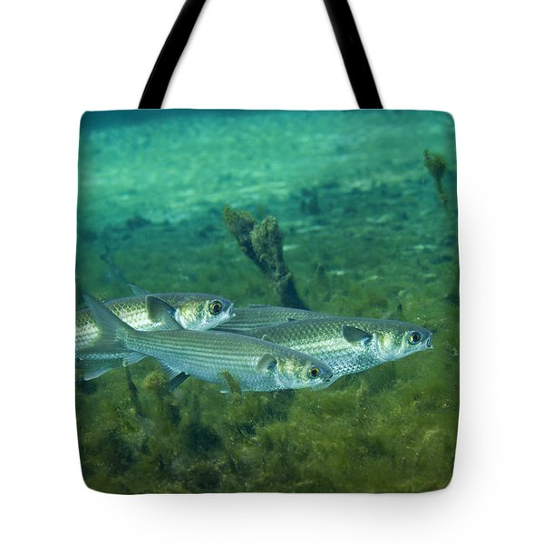 A School Of Striped Mullet Wim Tote Bag by Michael Wood