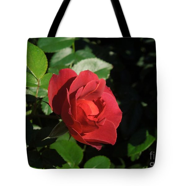 A Single Burgundy Rose Tote Bag by Chad and Stacey Hall