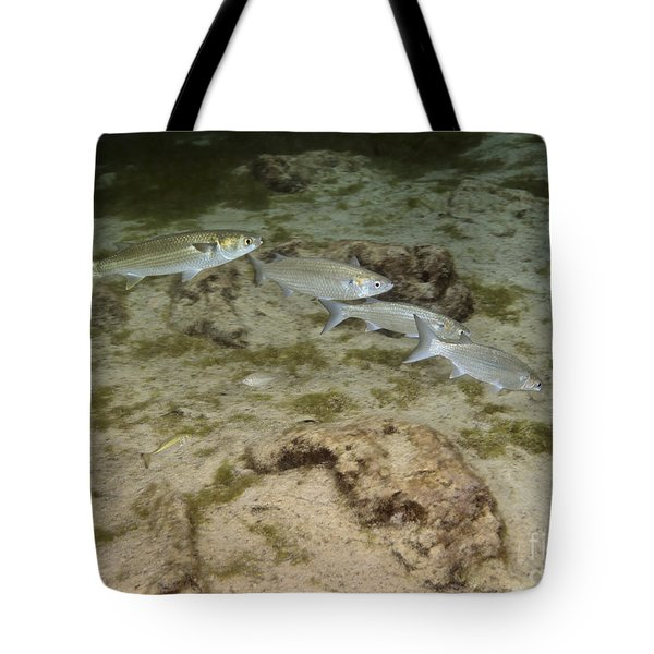 A Small School Of Grey Mullet Swim Tote Bag by Terry Moore