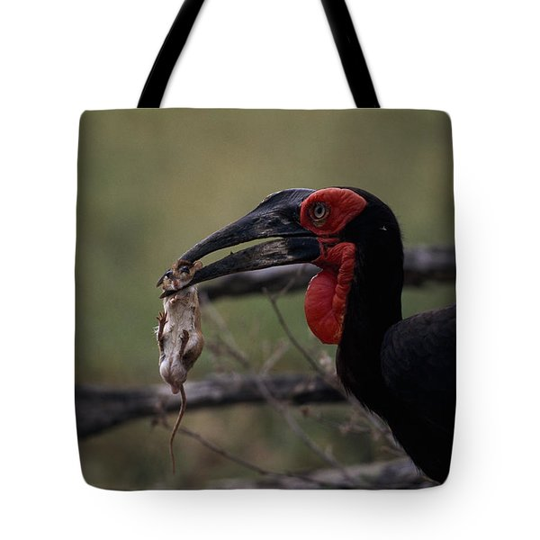 A Southern Ground Hornbill Prepares Tote Bag