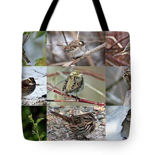 A Study In Sparrows Tote Bag by Joe Faherty