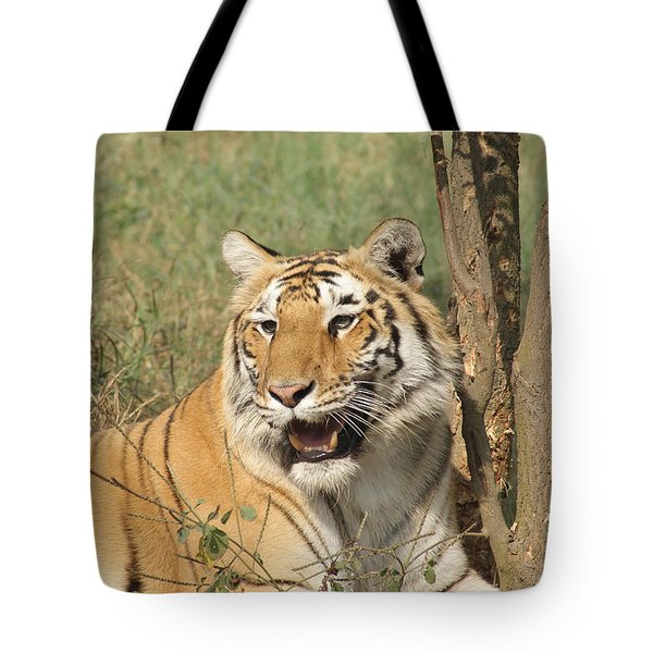 A Tiger Lying Casually But Fully Alert Tote Bag