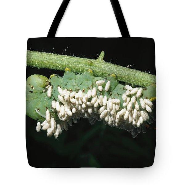 A Tobacco Hornworm Caterpillar Tote Bag by Brian Gordon Green