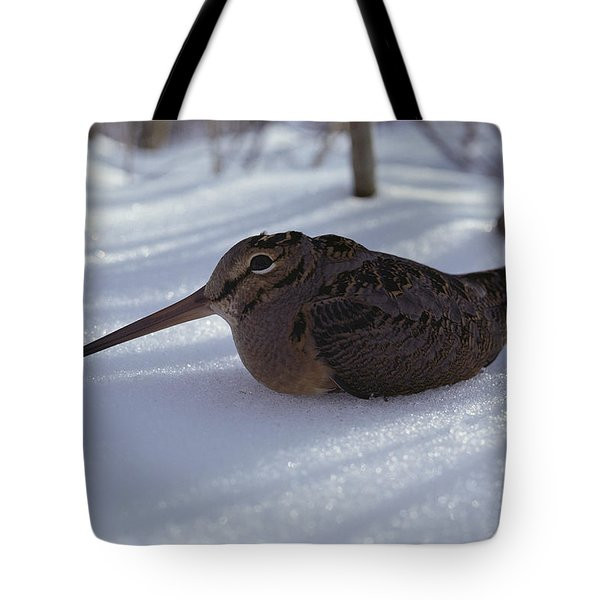 A Woodcock Sits In The Snow Tote Bag