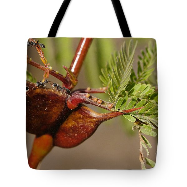Acacia Thorns With Pseudomyrmex Ants Tote Bag by Raul Gonzalez Perez