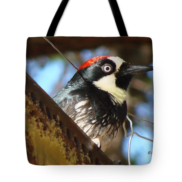 Tote Bag featuring the photograph Acorn Woodpecker by Linda Cox