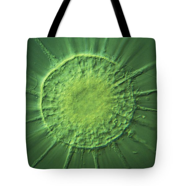 Actinophyrs Lm Tote Bag by MI Walker