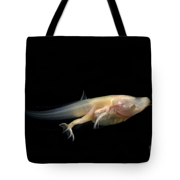 African Clawed Frog Tadpole Tote Bag