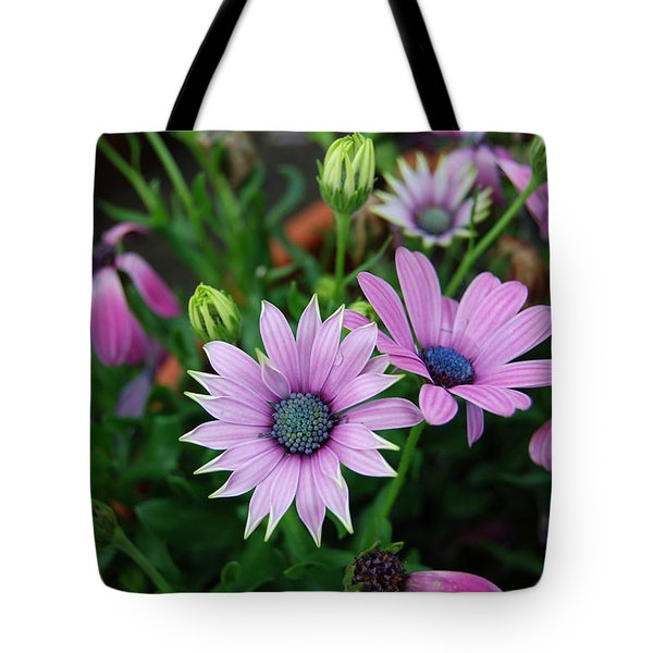 Tote Bag featuring the photograph African Daisy by Eva Kaufman