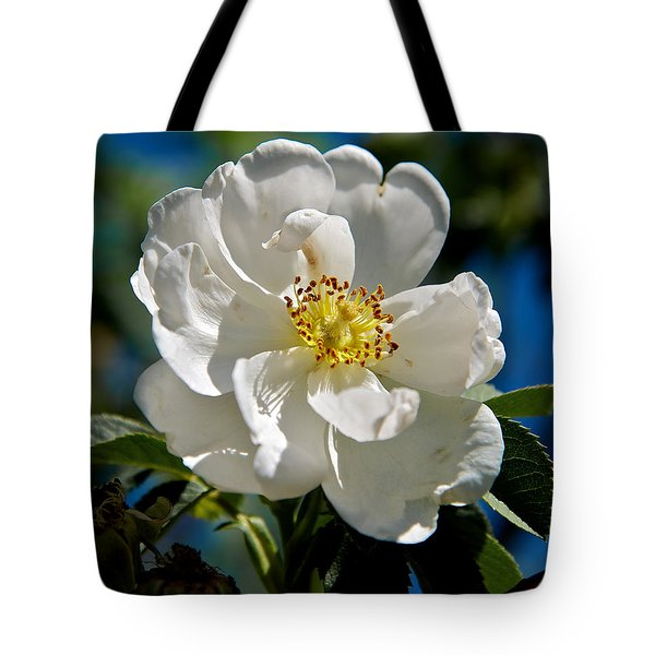 Alba Semi-plena Tote Bag by Stephen  Johnson