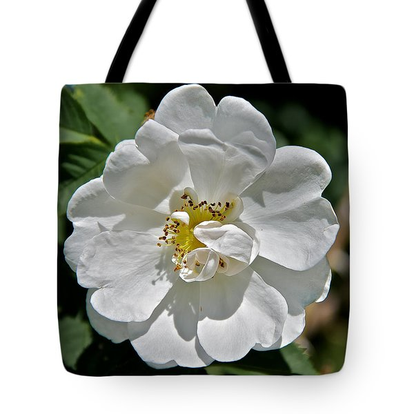 Alba Suaveolens Rose Tote Bag by Stephen  Johnson