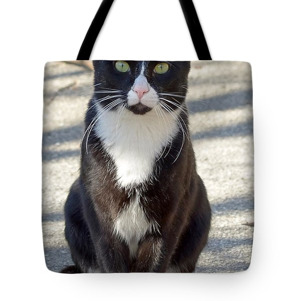 Alley Cat Tote Bag by Lisa Phillips