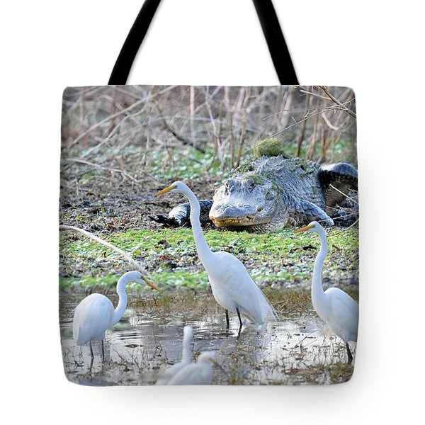Tote Bag featuring the photograph Alligator Looking For Food by Dan Friend