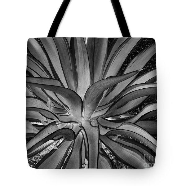 Aloe Black And White Tote Bag by Rebecca Margraf