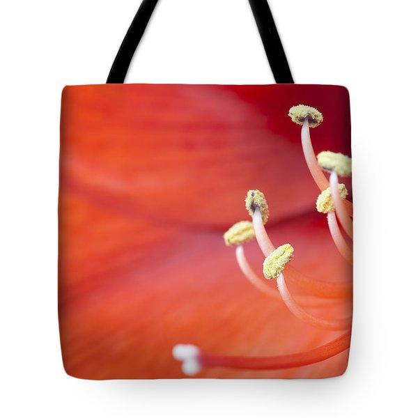 Amaryllis Bloom Tote Bag