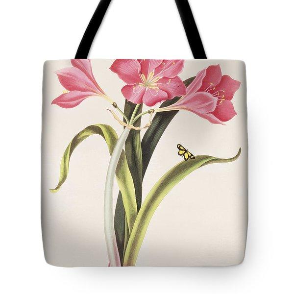 Amaryllis Purpurea Tote Bag by Robert Havell
