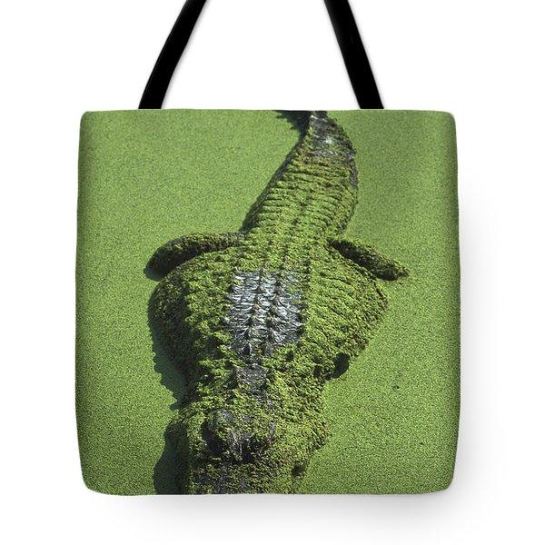 American Alligator Alligator Tote Bag