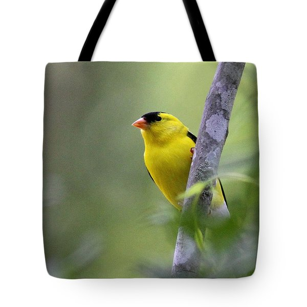 American Goldfinch - Peaceful Tote Bag by Travis Truelove