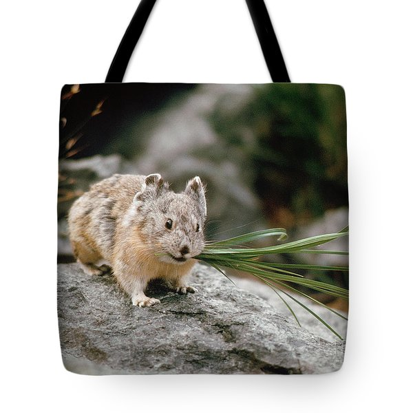 Tote Bag featuring the photograph American Pika by Doug Herr