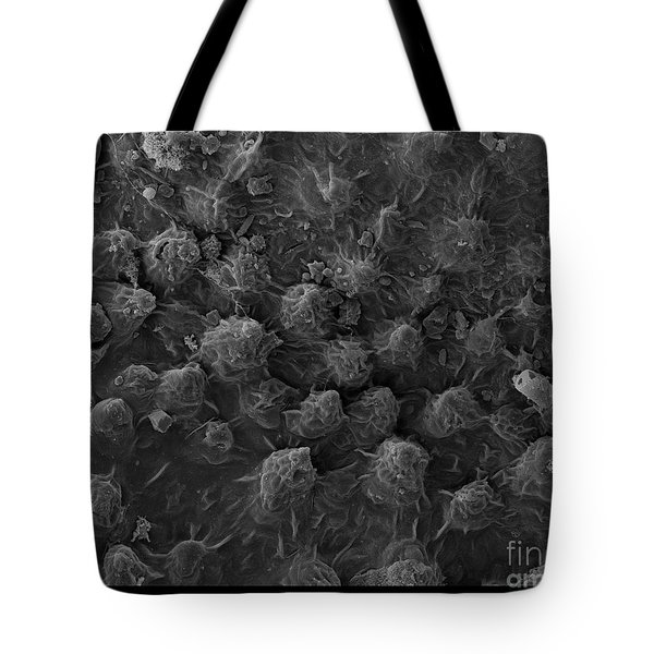 American Toad Skin, Sem Tote Bag by Ted Kinsman