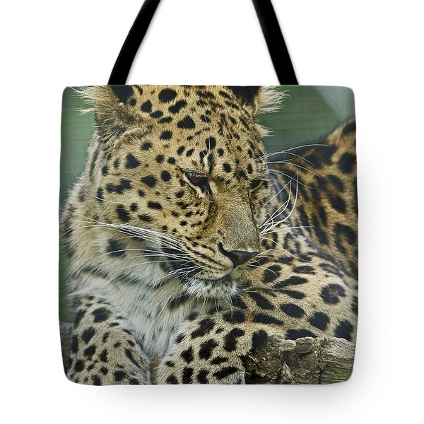 Tote Bag featuring the photograph Amur Leopard by JT Lewis