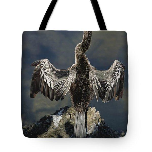 An American Anhinga Dries Its Wings Tote Bag