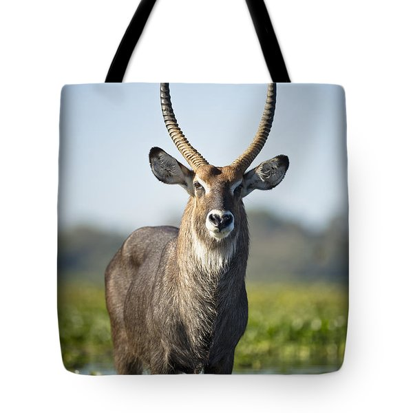 An Antelope Standing In Shallow Water Tote Bag by David DuChemin