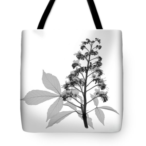 An X-ray Of A Chestnut Tree Flower Tote Bag by Ted Kinsman