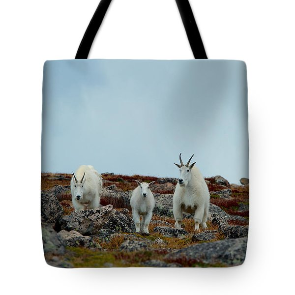 And Baby Makes Three Tote Bag by Stephen  Johnson