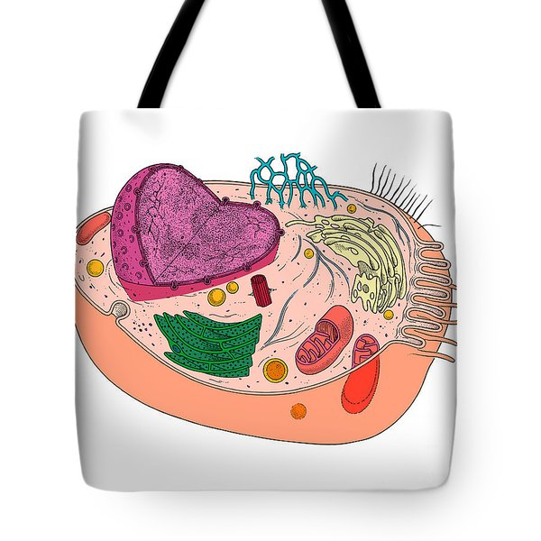 Animal Cell Diagram Tote Bag by Science Source