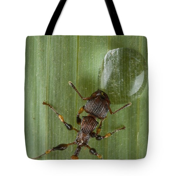 Ant Drinking From Water Droplet Papua Tote Bag by Piotr Naskrecki