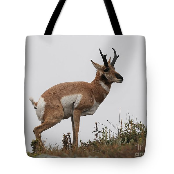 Antelope Critiques Photography Tote Bag by Art Whitton
