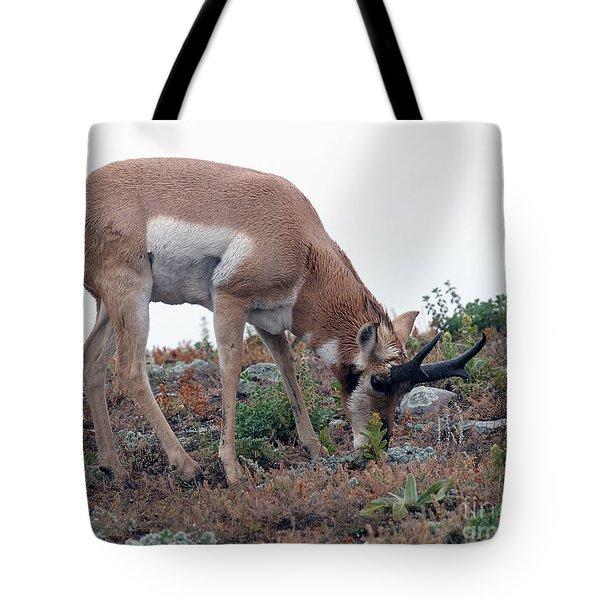 Antelope Grazing Tote Bag by Art Whitton