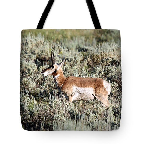 Antelope In Lamar Valley Tote Bag