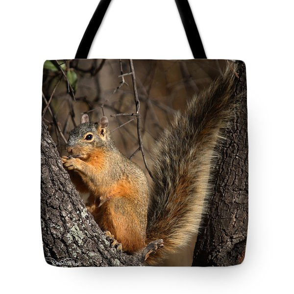 Apache Fox Squirrel Tote Bag by David Salter