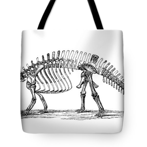 Apatosaurus Excelsus,  Aka Brontosaurus Tote Bag by Science Source
