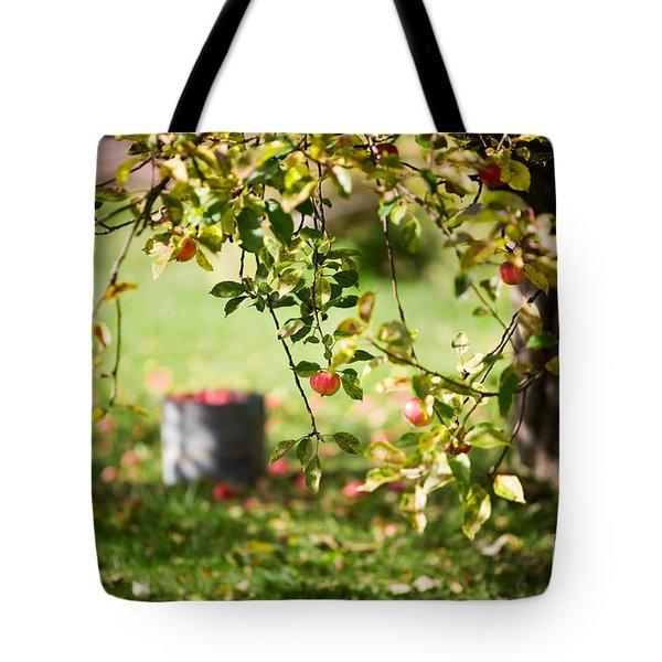 Apple Tree Tote Bag by Kati Molin