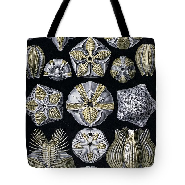 Artforms Of Nature Tote Bag by Ernst Haeckel